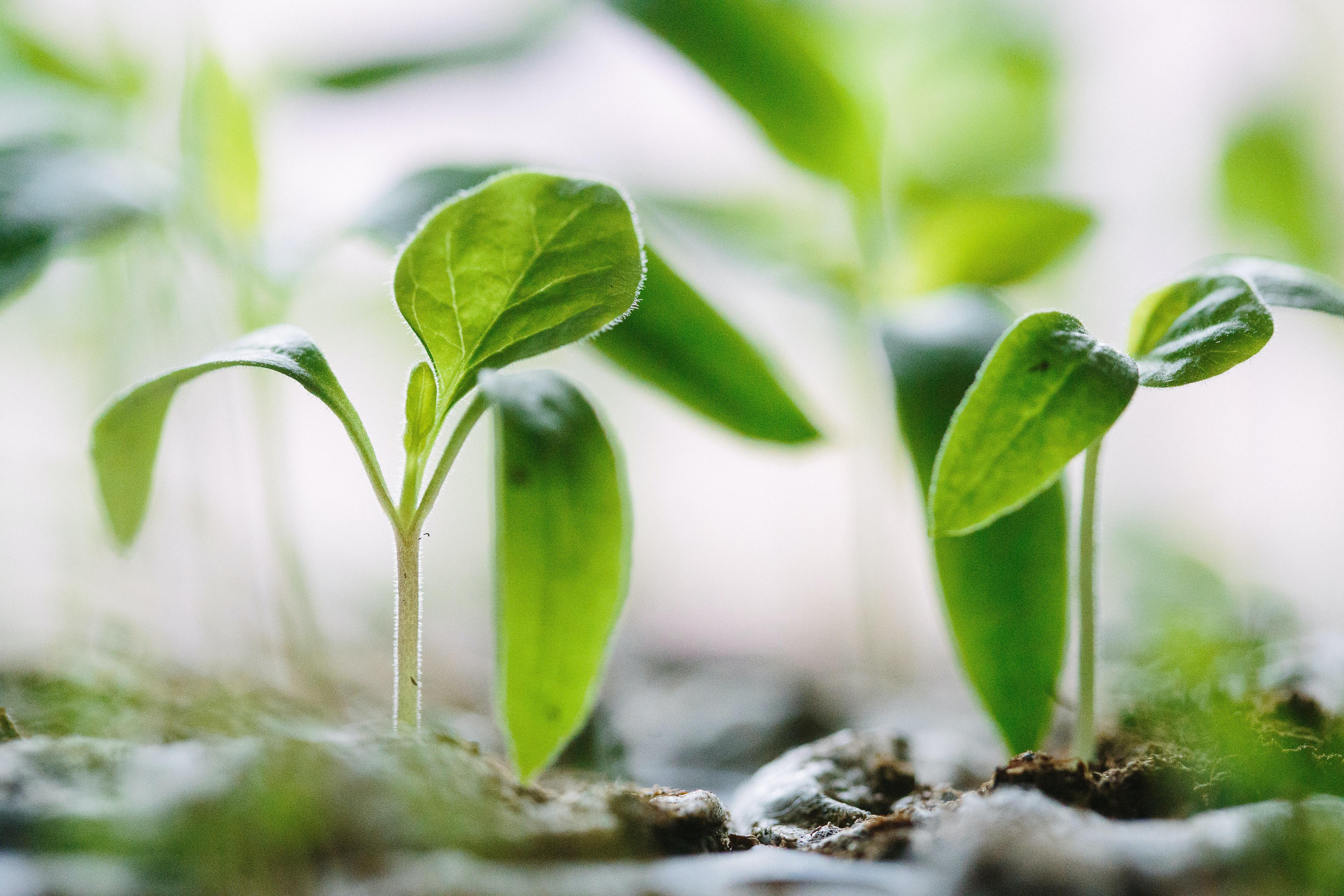 Capital efficient growth for SaaS